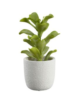 potted-kalanchoe by crate&barrel