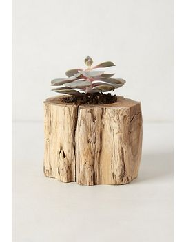 tree-trunk-planter by anthropologie