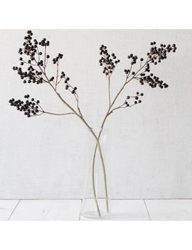 chinese-privet-stem by west-elm
