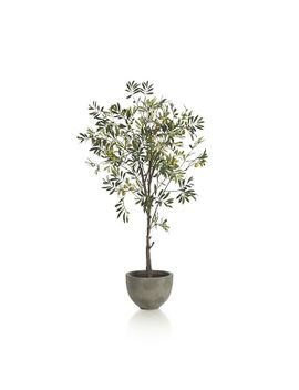 potted-olive-tree by crate&barrel