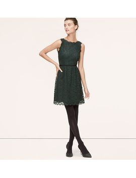 petite-scallop-lace-dress by loft