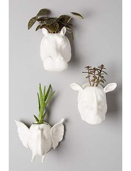 sahel-wall-planter by anthropologie