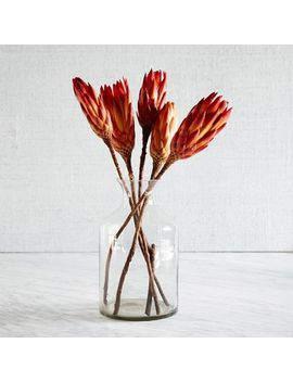 natural-protea by west-elm