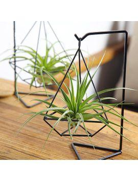 unique-air-plant-kits-with-tillandsia-brachycaulos,black-metal-holder-office-work-desk-decor,gifts-for-husband by etsy