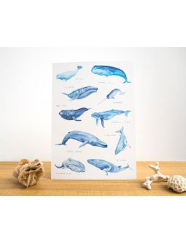 whales-of-the-world-watercolour-a4-or-a3-print-__-painting-art-print-of-whales-__-blue-whale-__-beluga-__-narwhal-__-humpback-__-save-the-wh by etsy
