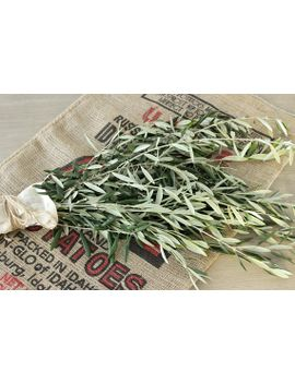 olive-branches--8-10-stem-bunches by etsy